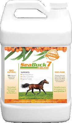 SeaBuck7 Equine