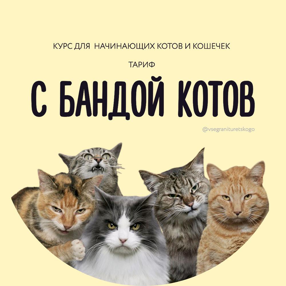 ДОВЕРИТЕЛЬНАЯ РАССРОЧКА 2 Турецкий для начинающих котов (Тариф С БАНДОЙ КОТОВ) #2
