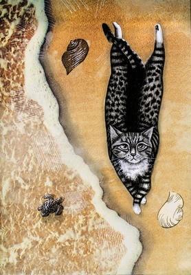 Beach cat 5 x 7