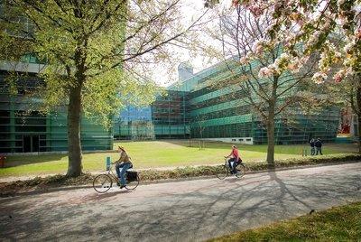American Studies (Radboud - Lisans)