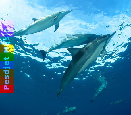 Dolphin Movements - Portal 2 (short)