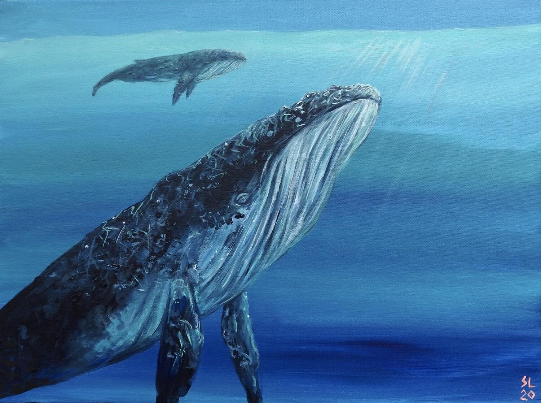 Humpback Whale (Study)
