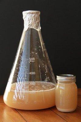 Yeast Starter Service (1 Liter)