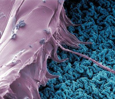 Nanobind Pilot Project