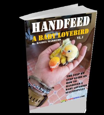 HANDFEED a baby Lovebird eBOOK ( for beginners )