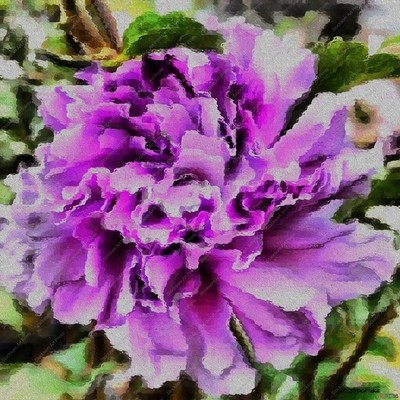 Textured Hibiscus