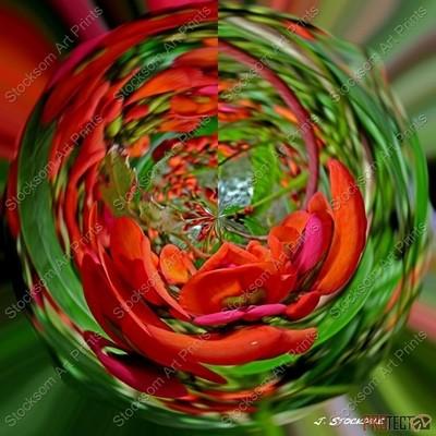 Red Flowering Pea