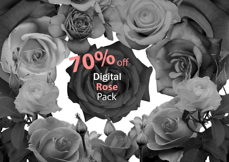 Rose tattoo pack