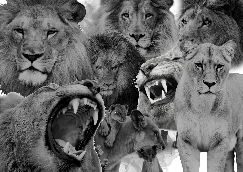 digital lion pack