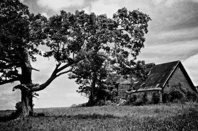Tree + Barn
