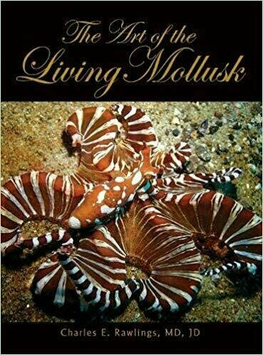 The Art of the Living Mollusk - Photography