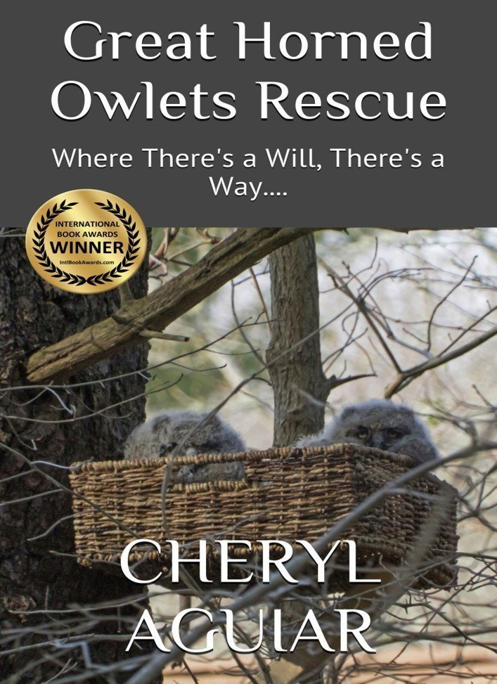 Great Horned Owlets Rescue: Where There's a Will, There's a Way.... - Animals/Pets