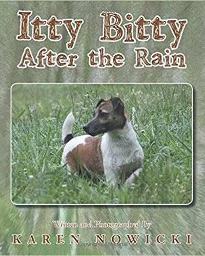 Itty Bitty After the Rain - Children's Fiction