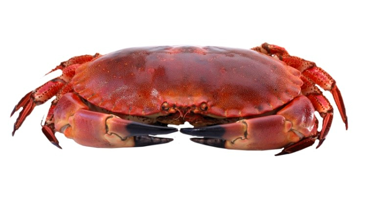Krabbekjøttpulver gourmet (proff/storkjøkken)