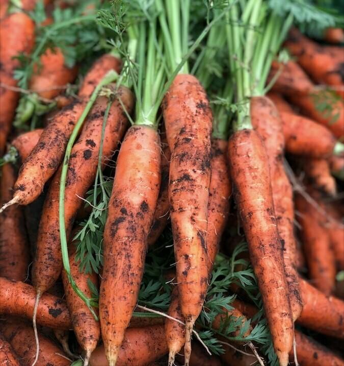 Uvaska gulrøtter fra Randaberg 4 kg