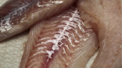 Lyr filet uten skinn og bein