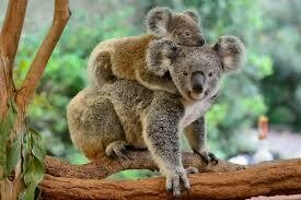Wildlife Australia