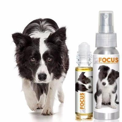 Focus - Aromatherapy Spray