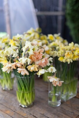 Mixed Specialty Narcissus Bunch