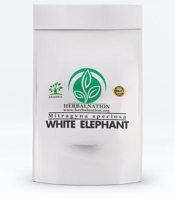 WHITE ELEPHANT Mitragyna speciosa