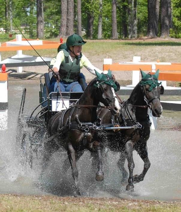 Driving Reins for Pairs - Colored Biothane