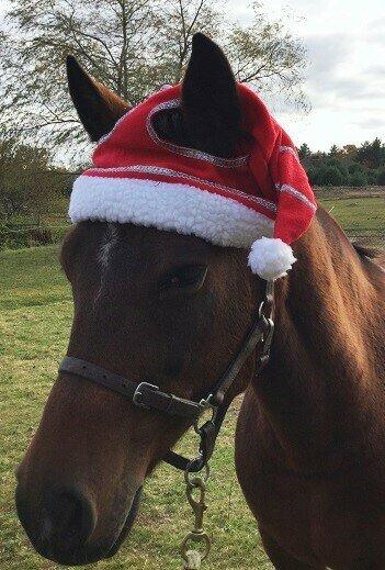 Christmas Horse Hat