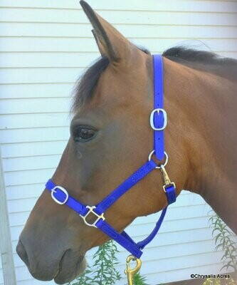 Biothane Nose Buckle Halter - Colors