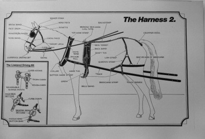 Harnessing and Carriage Driving Poster Complete Set