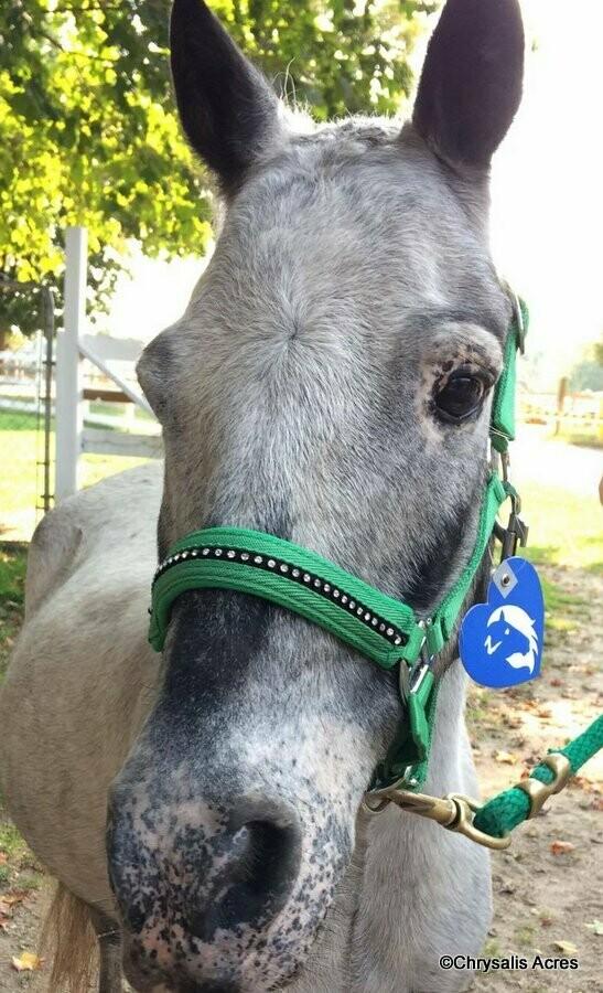Mini and Pony Size Halter - Padded w/rhinestones