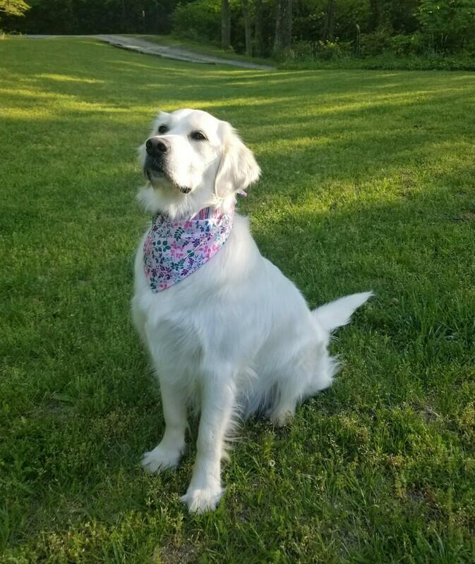 Pet Bandana Handmade,  Reversible Tie-on Pet Bandana, Pet Accessories,  Dog Bibs