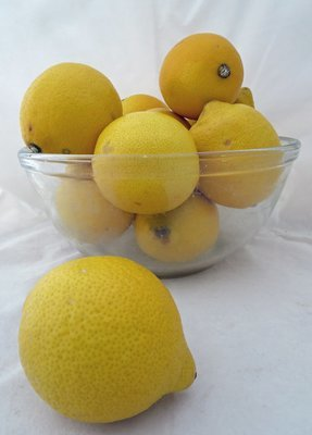 Lemon & Quince Marmalade