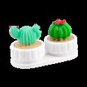 Lenzenpotjes cactus