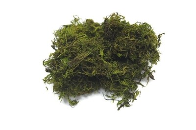 Premium moss (small bag)