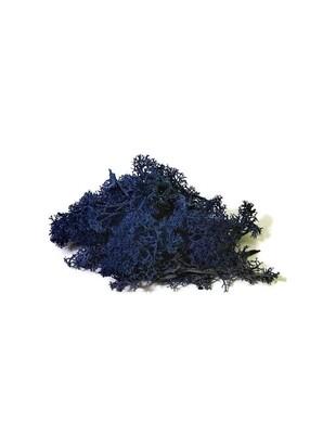 Raindear moss - dark blue
