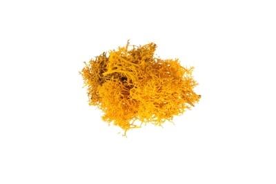 Raindear moss - yellow