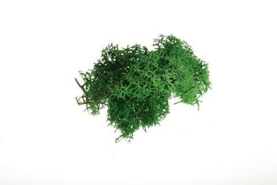 Raindear moss - dark green