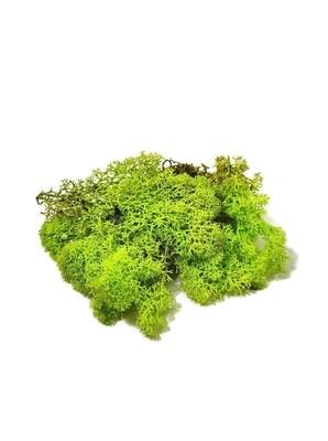Raindear moss - grass green