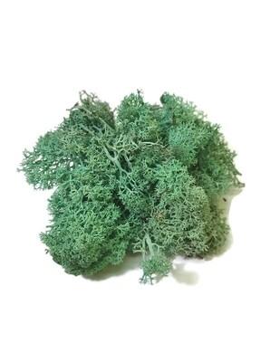 Raindear moss - mint green