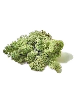 Raindear moss - light green