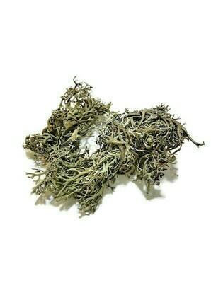 Natural Lichen (large bag)