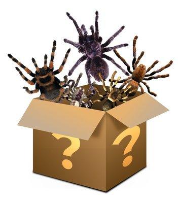 Mystery box £100 - Please read description