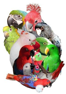 Talking Parrots - Softcover