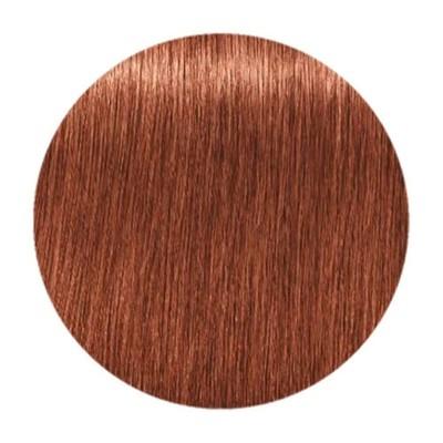 Краска для седых волос IGORA ROYAL ABSOLUTES 7-560 Средний Русый Золотистый Шоколадный