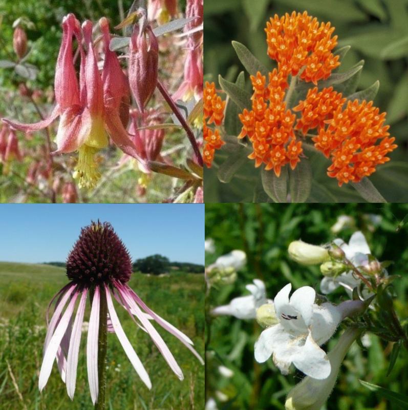 Spring Pollinator Pocket Garden - Full Sun to Partial Shade, Mesic to Dry/Mesic