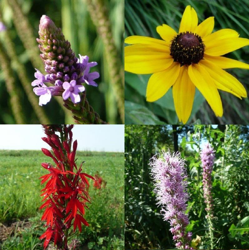 Summer Rain Pocket Garden - Full to Partial Sun, Wet/Mesic to Dry/Mesic