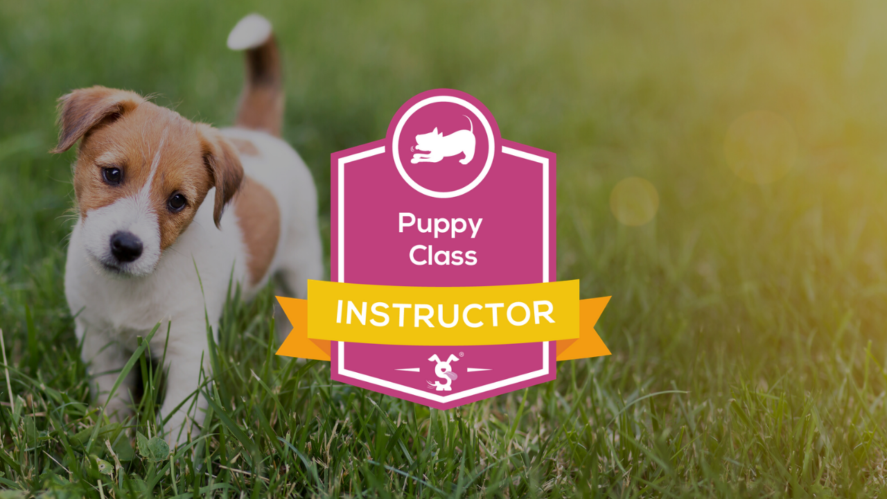 Puppy Class Instructor Course
