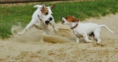 Canine Body Language - LIVE STREAM