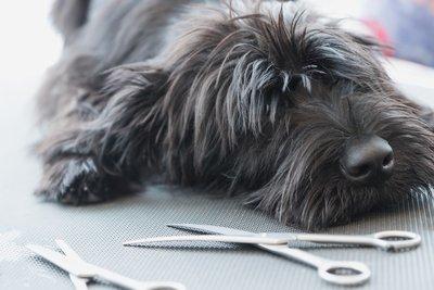 Dog Grooming Scissor Sharpening
