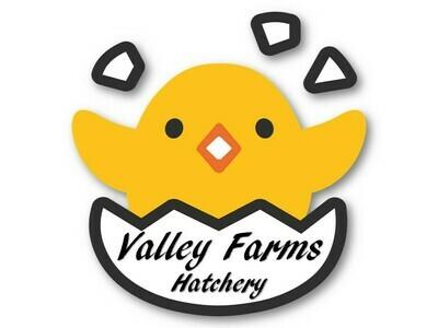 Golden Valley Hatching Eggs (Half Dozen)
