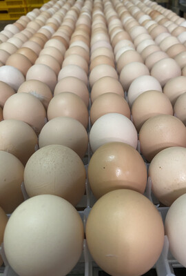 Cornish Cross Broiler Hatching Eggs (Half Dozen)